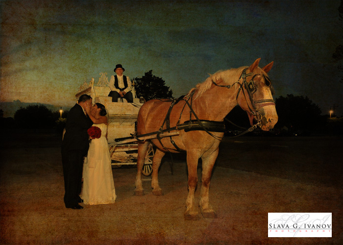 bride posing in front of a horse at oakland farm and ranch in Tomball Texas near Houston at their wedding for the photographer
